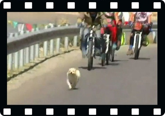 dog_runs_to_Tibet-2