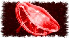 medusa--1