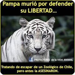 Pampa
