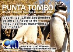 pinguinos PUNTA TOMBO - CHUBUT