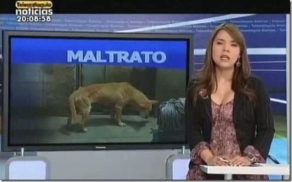 maltrato animal barrio la almería medellín