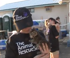 help_pets_affected_by_hurricane_sandy_at_the_animal_rescue_site