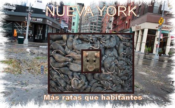 n_york)