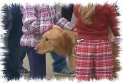 comfort_dog
