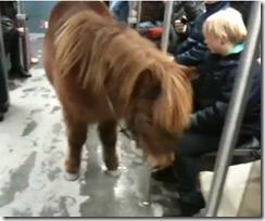 pony_berlín