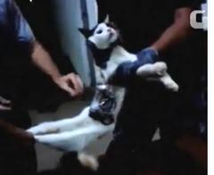 gato_mensajero