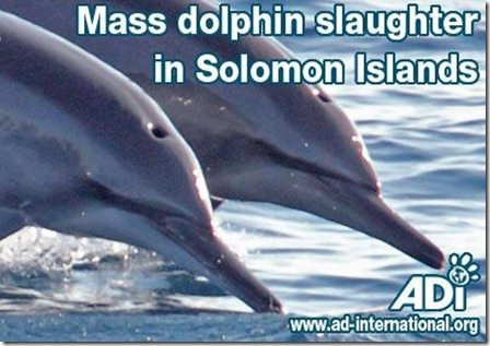 mass dolphin slaughter