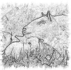 cordero-oveja