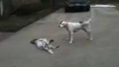 perro-finge-muerte