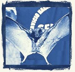 murciélago2