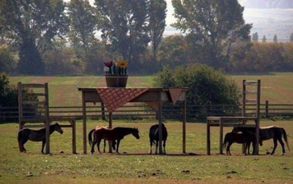 'casa_techo_mesa'_caballos