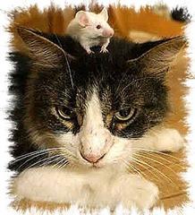 Ratón-gato FOTO Wendy Ingram