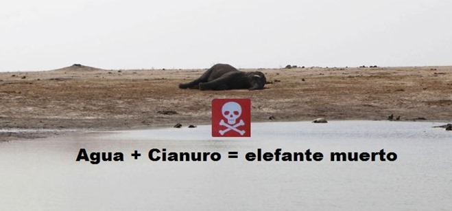 Agua   cianuro = elefante muerto