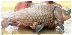 giant-carp-caught-