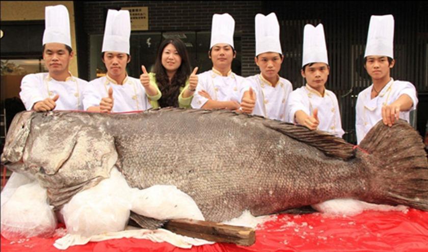 Giant grouper in Dongguan, Guangdong province