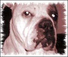 Mulan, el bulldog asesino