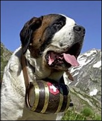 Switzerland's St Bernard dog