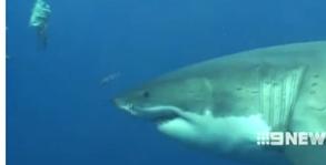 ataque_de_tiburón_en_Grecetown