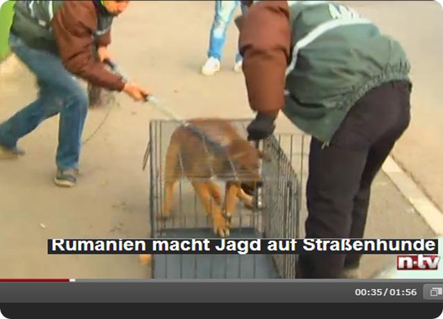 caza_de_perros_en_rumania