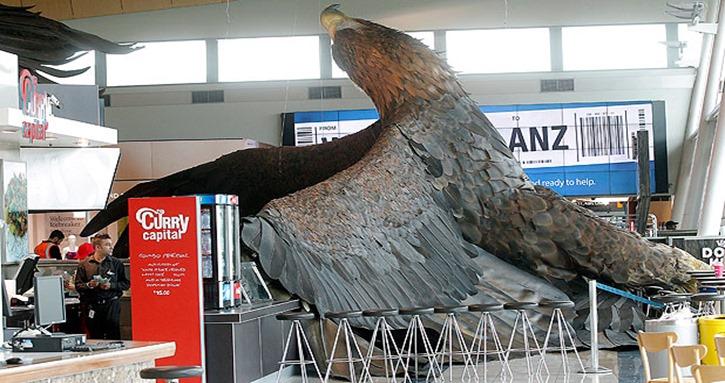 águila_-_n_zelanda - KENT BLECHYNDEN -Fairfax NZ