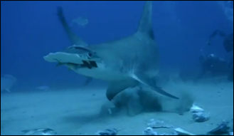 DIVERS_CHARGED_AFTER_FEEDING_SHARKS