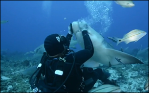 DIVERS_CHARGED_AFTER_FEEDING_SHARKS-