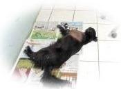 Perrita COOKIE -Pese a todos los esfuerzos por salvarla que hizo el veterinario Enrique Rimbaud, no sobrevivió al flechazo