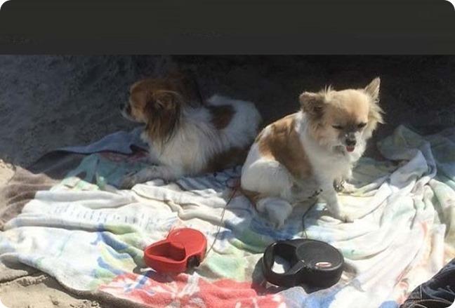 perros- playa