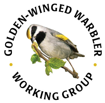 Golden-winged Warbler Working Group (Vermivora chrysoptera)