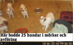 25_hundar-