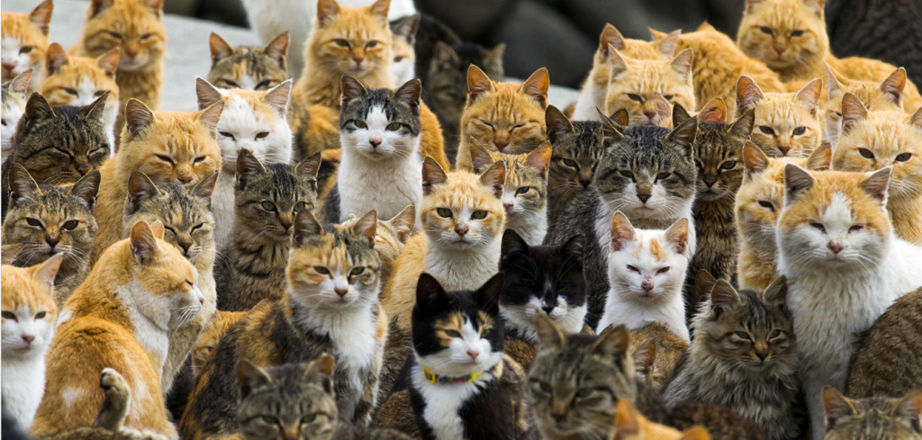 Aoshima_island_-_cats