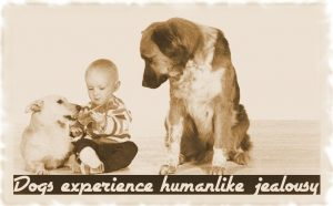 Dogs experience humanlike jealousy