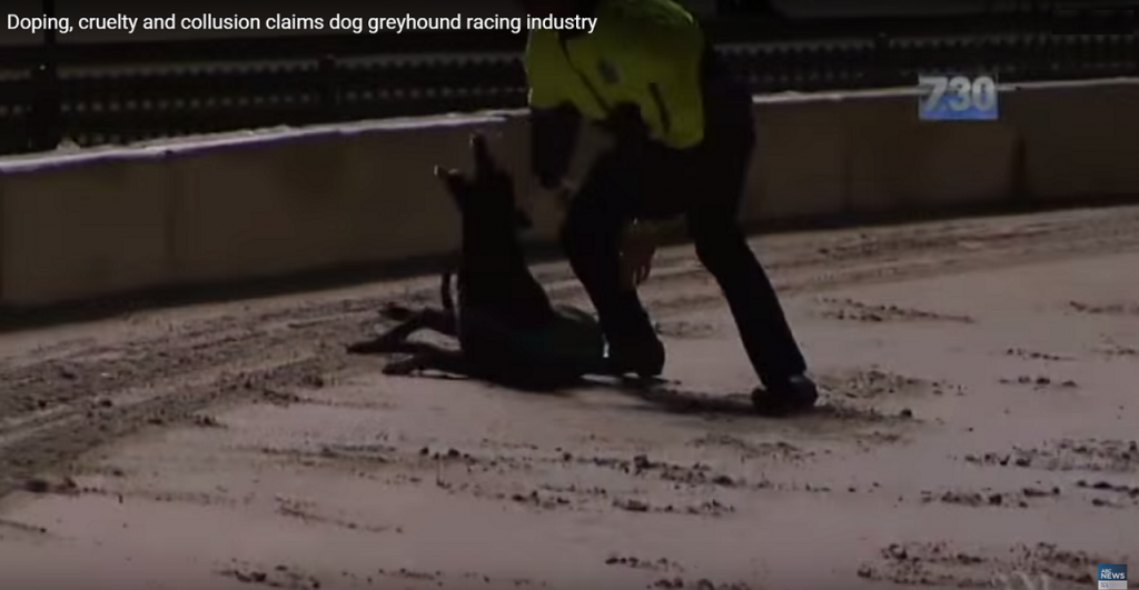 greyhound_racing_industri