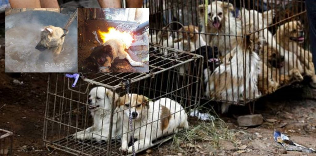 Vendors wait for customers as dogs are kept in a cage at Dashichang dog market ahead of a local dog meat festival in Yulin, Guangxi Autonomous Region, June 21, 2015. In the market, some dogs are sold as pets, while others are sold for dog meat. Local residents in Yulin host small gatherings to consume dog meat and lychees in celebration of the summer solstice which marks the coming of the hottest days for the festival, which this year falls on Monday. REUTERS/Kim Kyung-Hoon