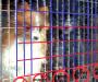 Alerta por fraude: algunos grupos de 'rescate' compran perros a criadores