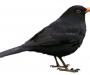El pájaro no canta porque es feliz, es feliz porque canta