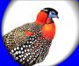 """Jujurana: el """"rey de las aves"""""""