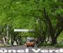 Túnel Verde de Envigado, 'víctima' de las motosierras
