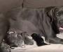 Perra parió 21 cachorros y batió récord en Australia