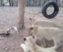 Perro valiente