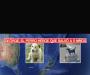 Estatua a George, el perro que salvó a 5 niños del ataque de 2 pitbulls