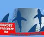Tubarões em Camboriú!